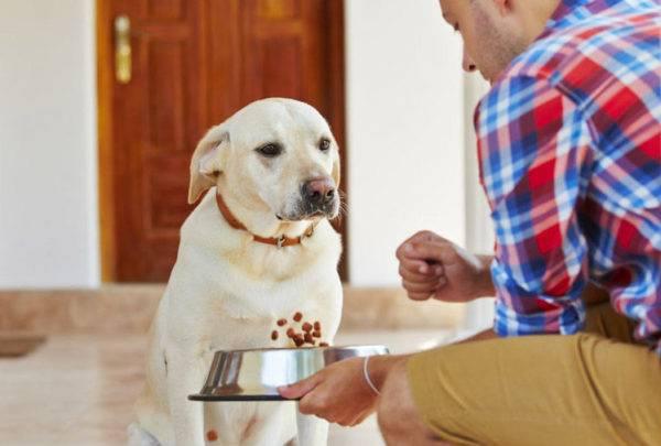 Собака не хочет есть при панкреатите