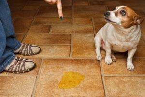 Как отучить собаку писать и гадить дома
