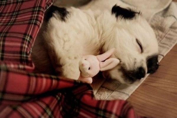 Режим сна собаки
