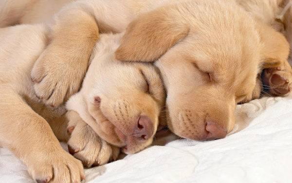Сколько спят собаки в сутки