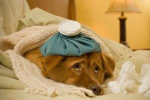 Пневмония у собак
