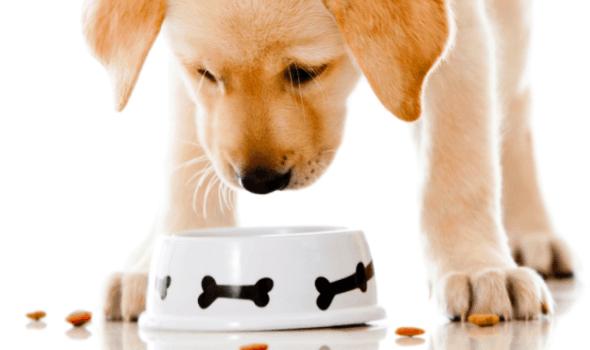 Как понять что сухой корм подошел собаке