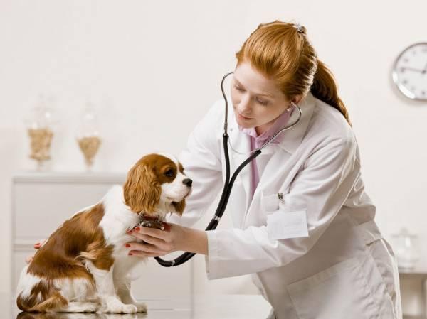 Лечение власоедов у собаки