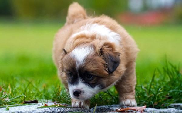Почему собака ест фекалии
