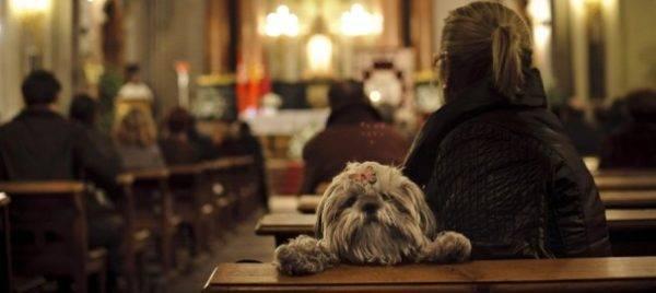 Собаки в религии