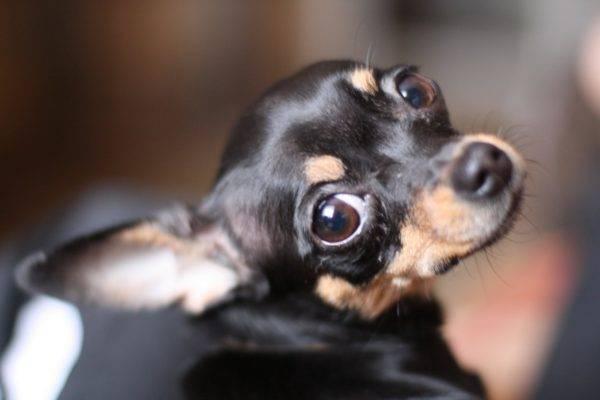 Клички для маленьких пород собак