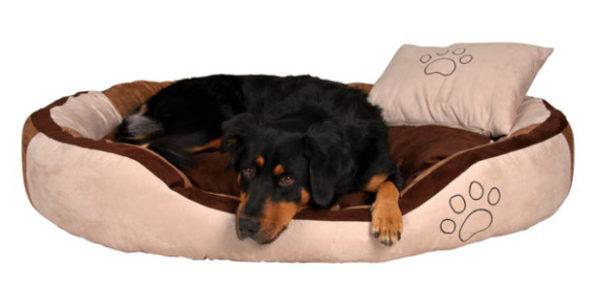 Лежак для собаки: рекомендации по выбору