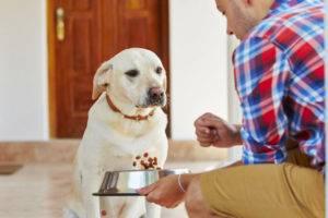 Диета для собак