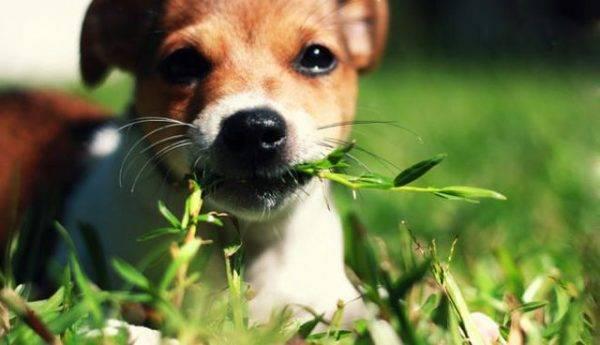 Траву есть опасно
