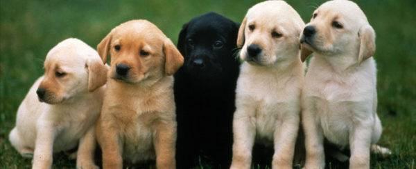 Собачьи имена для мальчика