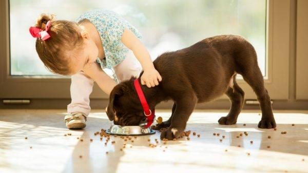 Сухой корм для маленьких собак