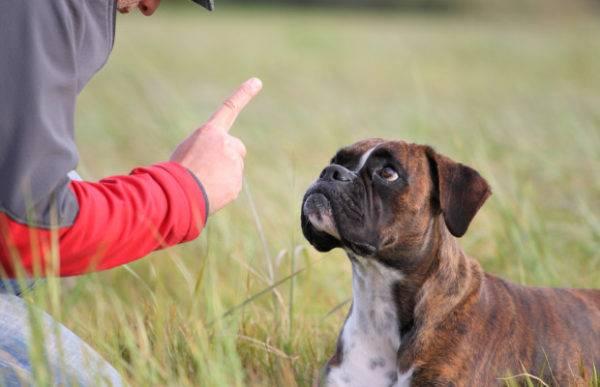 Как отучить собаку есть фекалии
