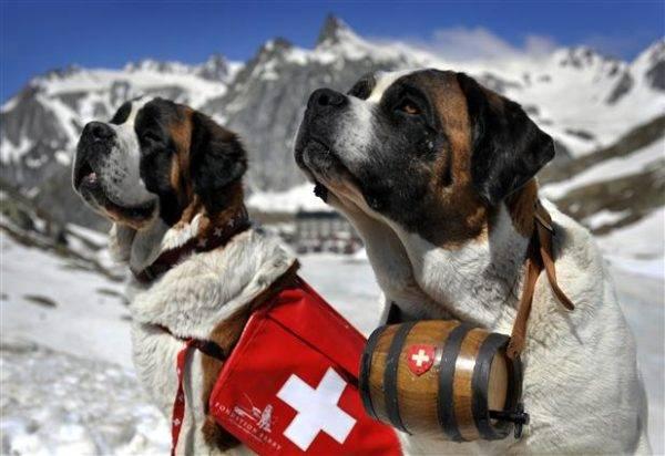 Умения собак спасателей