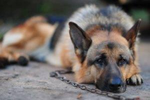 грустная собачка лежит