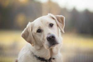 грустная собачка на красивом фоне