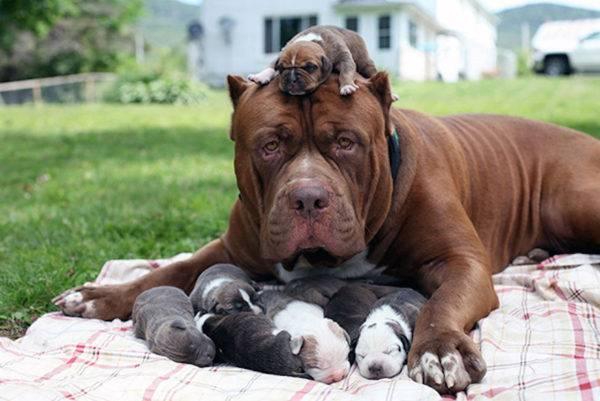 щенки и их мама отдыхают