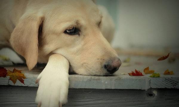 грустная и милая собачка