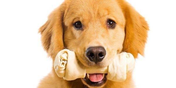 милый пёсик с косточкой