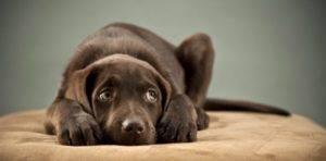 красивая собачка лежит