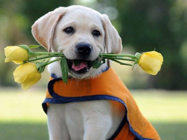 собачка с цветочками
