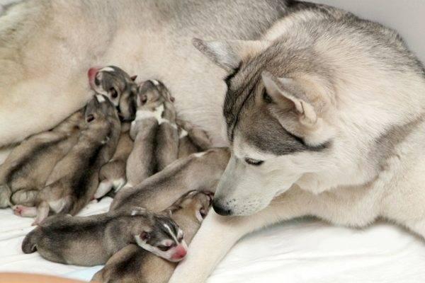 милые щенки и их мама