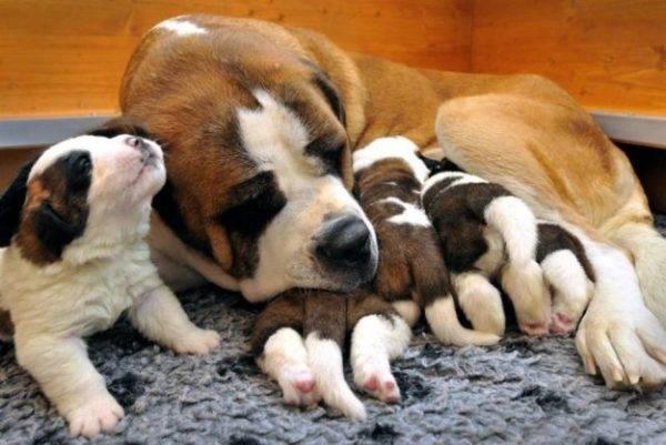 милые щенки с мамой