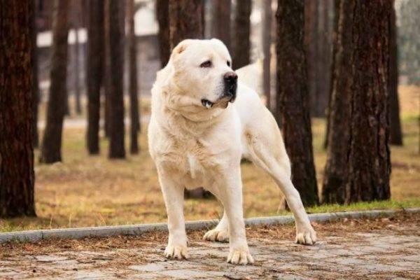 В Курске застрелили напавшего на женщину пса