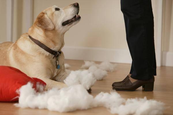 обучение пса