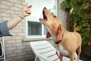учить собаку команде голос