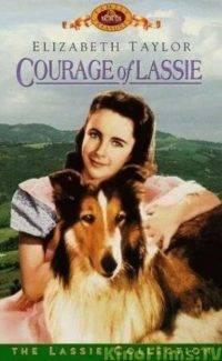 Храбрость Лесси