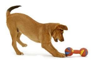 щенок и игрушка