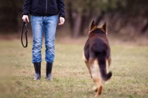 Как научить собаку команде ко мне