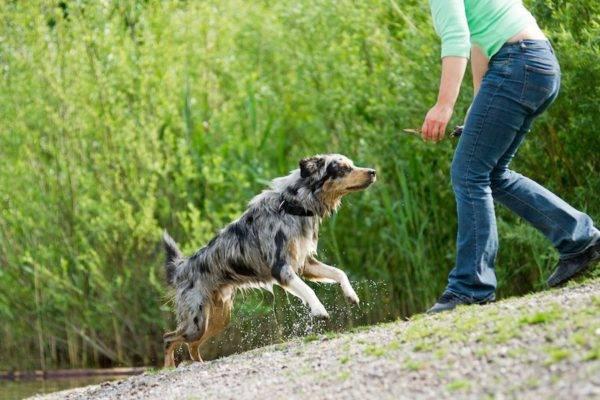 научить собаку команде ко мне