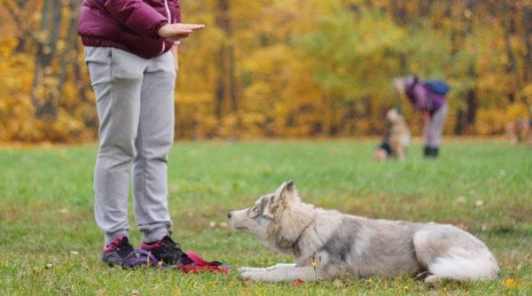 научить собаку команде лежать