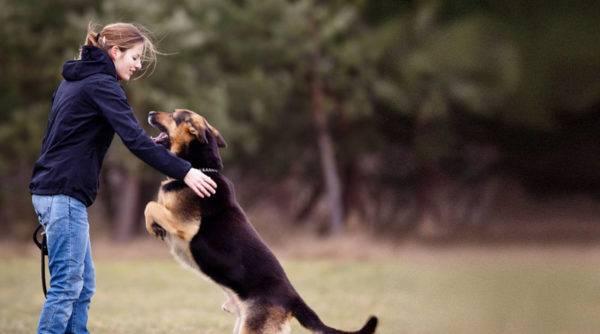 учить собачку командам