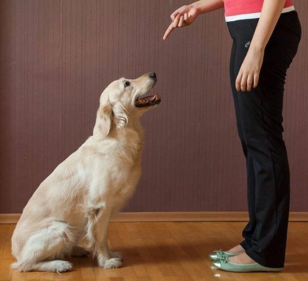 учить собачку команде сидеть