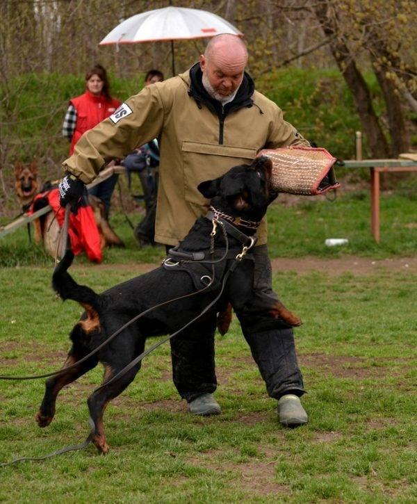 ФАС команда собаке
