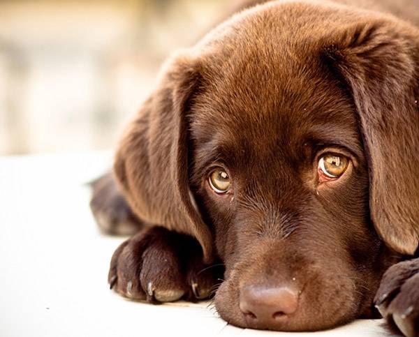 грустная собачка