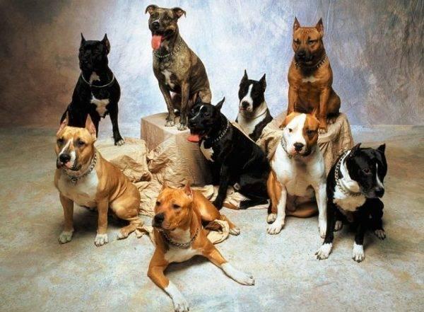 много злых собак