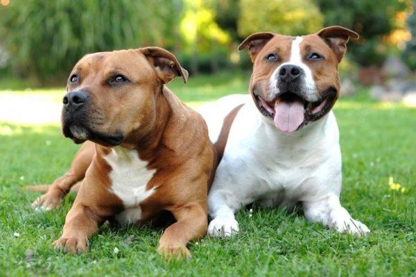 две миленькие собачки