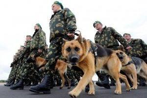Служебные породы собак