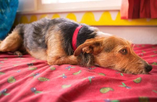 Болезни почек у собак