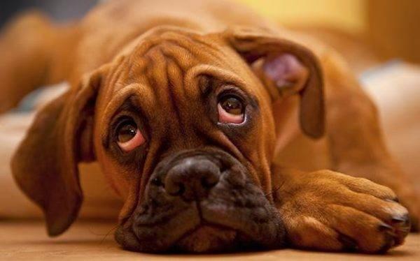 заболевшая собачка
