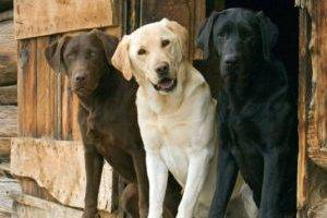 Лысые (голые) породы собак: с фотографиями и названиями