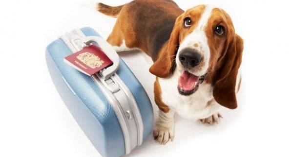 Подготовка собаки к поездке