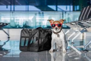 собака в аэропорту