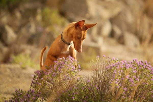 Чирнеко дель Этна и цветы