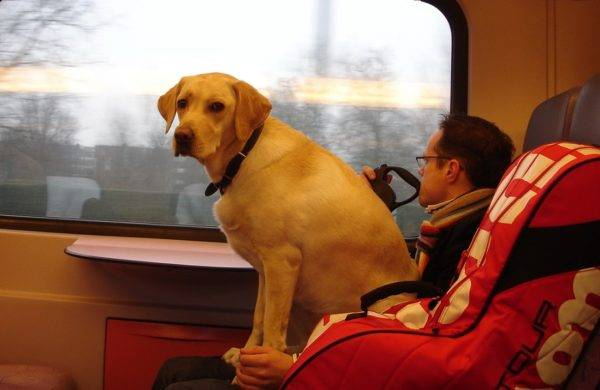 Перевозка животных на железнодорожном транспорте