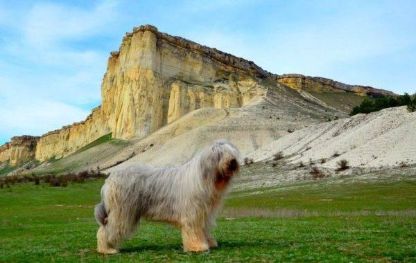 Южнорусская овчарка на фоне гор