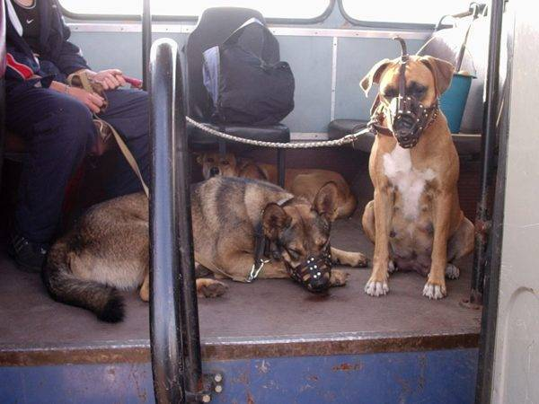 Перевозка собаки в общественном транспорте